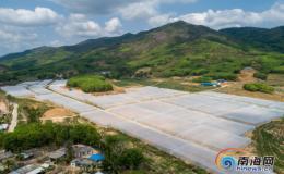 500亩热带新型抗台风大跨度平顶网棚落户乐东