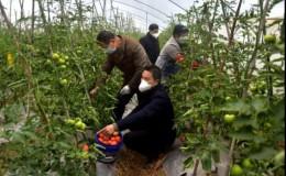 恒达注册_深度剖析!疫情对蔬菜产业的7大深远影响,蔬菜人又该如何自救?