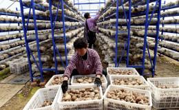 河南汝阳:特色产业助力精准脱贫