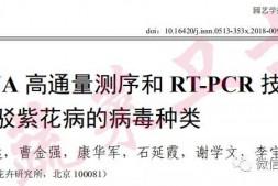 恒达招商_中国农科院李宝聚团队揭示茄子紫花病毒病原