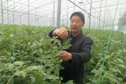恒达登录地址_王乐义:寿光蔬菜产业有能力继续领跑全国
