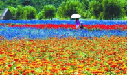 恒达公测_京郊农业的绿色变奏 作物面积减七成、耗水减四成