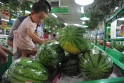 恒达平台登录_瓜甜如蜜产业兴:中国西瓜甜瓜发展暨科研生产协作60周年回顾