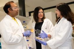 恒达娱待遇_科学家发现棉花废弃物的新用途:被用于制造可生物降解的塑料