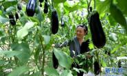 恒达开户测速_陕西安塞:设施农业促增收