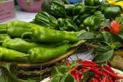 恒达信誉吗_黑龙江蔬菜产业发展主打科技牌