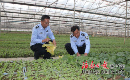 恒达登录_三亚今年投入3500万元建设蔬菜基地