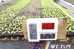 c恒达注册首页_长沙连续低温阴雨 蔬菜基地减产 农技专家支招