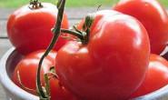 恒达登录_华中农大揭示番茄进化中维生素C合成的调控机制