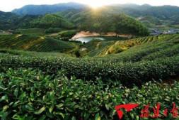 恒达公测_福建农业利用台资数量和规模居大陆第一