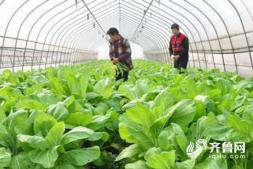 恒达注册登录_3万大棚、1068养殖场户……潍坊发布农业生产及设施灾后重建大数据