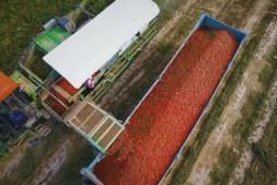 恒达平台_专家解读:坚持农业农村优先发展,乡村振兴即将迎来黄金期