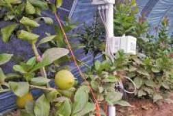 恒达注册_莱芜区实现南方水果规模化种植
