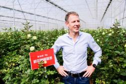 恒达公测_三天卖空千亩顶级玫瑰?这家荷兰品牌为何选择淘宝聚划算?