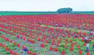 恒达登录地址_黑龙江省大力发展设施农业建设绿色菜园亮点扫描