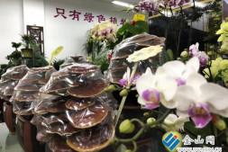 """c恒达注册首页_""""灵芝""""成了盆栽 年宵花市场""""热""""起来"""