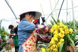 恒达平台_周宁:冷凉花卉撑起致富梦