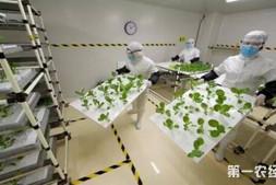 恒达注册登录_日本植物工厂正在进行蔬菜栽培 价格将与普通蔬菜相同