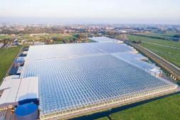 恒达平台_从番茄工厂化种植,解析荷兰温室优质高产的原因!