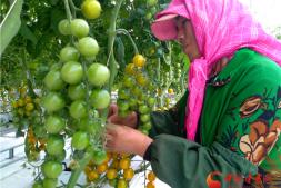 恒达平台_【改革开放40年】戈壁农业向荒漠要产业 酒泉崛起新绿洲(组图)
