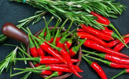 恒达平台_广西钦州打造冬种辣椒外运生产基地