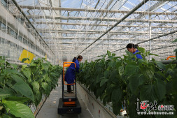 恒达注册平台_南和人工智能温室:卖蔬菜还卖风景