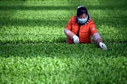 恒达公测_产学研协同创新 助推种苗产业发展——第十届全国蔬菜规模化高效育苗技术经验交流会今日在济南召开