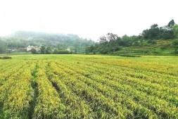 恒达注册账号_农业发展新模式:农业生产托管成为现代农业新引擎