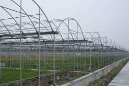 恒达娱乐_温室大棚葡萄移栽当年如何管理?栽培方法有哪些?