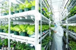 恒达注册账号_投资3.67亿,日本便利店7-11拟建立大型植物工厂