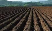 恒达注册平台_国家政策扶持!产业规模达千亿级!有机肥或成新农业淘金风口
