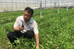 """恒达登录地址_新模式种菜,既抑制病虫害又能增加土壤的""""营养"""""""
