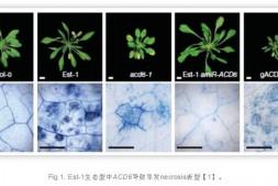 恒达娱乐_马普所Detlef Weigel实验室揭示植物自发免疫平衡新机制