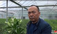 恒达注册账号_武汉农试站:百合花本地栽培试验取得成功