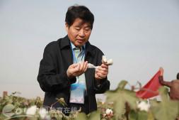 恒达代理平台_浙江农林大学喻树迅院士研发无膜种棉技术 助力新疆棉花生产可持续发展