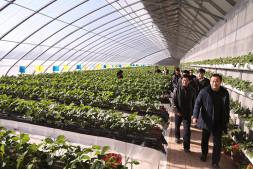 """恒达注册账号_废弃物再利用 滋养2019北京世园会""""绿色""""百蔬园"""
