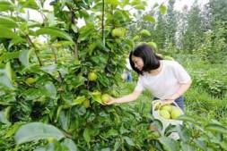c恒达注册首页_江苏泰兴举办首届绿色水果采摘节