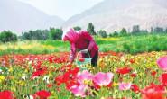 恒达开户测速_酒泉市肃州区调整产业结构 引进花卉制种产业