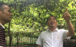 恒达平台登录_陕西西乡:小吊瓜 大产业