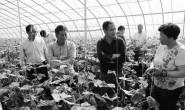 恒达注册_科技助力提升育种水平 驱动蔬菜品种换代升级