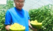 恒达公测_北京多彩新品种西甜瓜进上市期