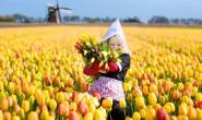 恒达代理平台_荷兰人围绕花卉玩出新花样用全新理念启发中国园艺产业
