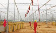 恒达平台_太谷:智能番茄温室大棚已初具规模