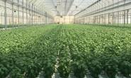 恒达招商_基质栽培是现代工厂化园艺趋势