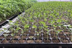 恒达正规么_促进设施蔬菜生产 北京市农业技术推广站给您提个醒