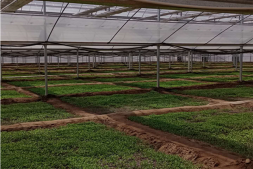 恒达正规么_秦州区设施蔬菜基地集约化育苗长势良好