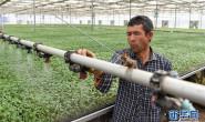 恒达注册账号_新疆阿克陶:发展设施农业 助力脱贫攻坚