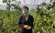 """恒达娱待遇_""""智慧农业""""为桨 陕西大荔推进农业产业高质量发展"""