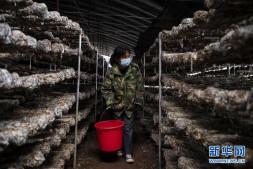 恒达平台_山西沁源:设施农业助增收