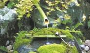 恒达注册登录_低调壮观的苔藓植物
